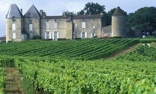 Bordeaux-vineyards