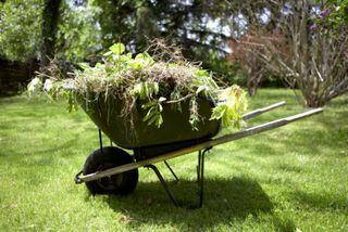 Weed-wheelbarrow